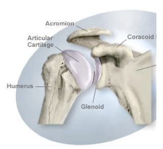 faqs on shoulder instability, Cephalic Vein